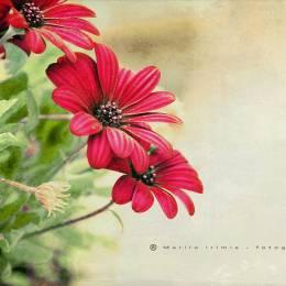 Mariló Bou 四月天。花满枝桠