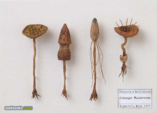 江本创的幻想標本博物館