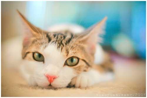 @Kitty Love