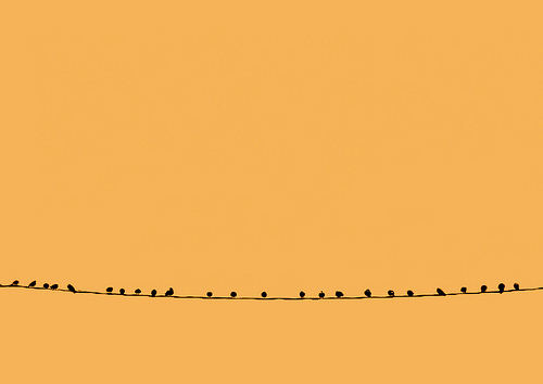 ~我是一只鸟