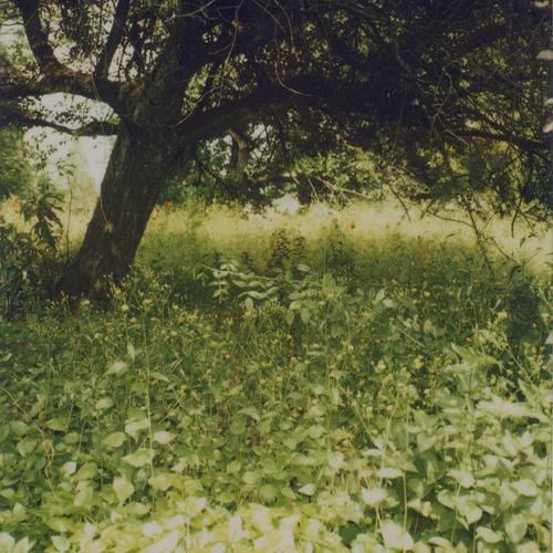 Anna Verlet的美丽的怀旧自然景象