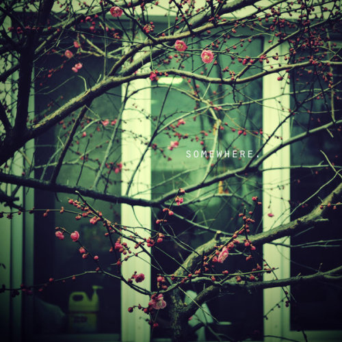 Pink Promise 摄影作品欣赏