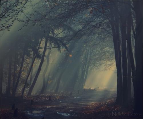 Nelleke Pieters  迷雾森林