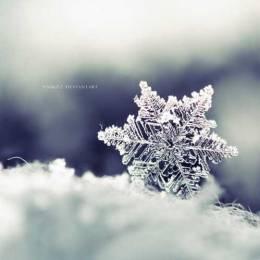 雪花雪花 自然摄影欣赏