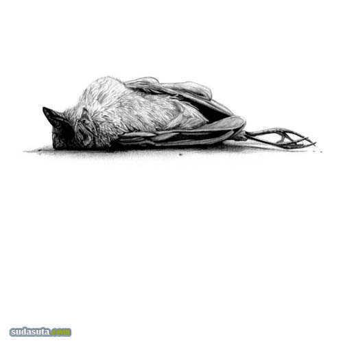 Amy Dover 动物之殇