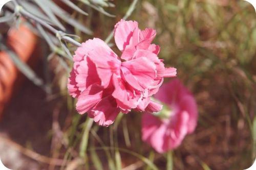 七月 花草日