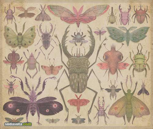 VLADIMIR《昆虫学》