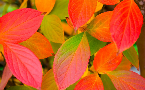Autumn Leafs Wallpapers<br /> http://wallpaperstock.net/autumn-leafs-wallpapers_w4190.html
