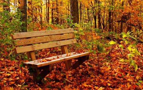 Autumn<br /> http://www.wallpaperhere.com/Autumn_17387