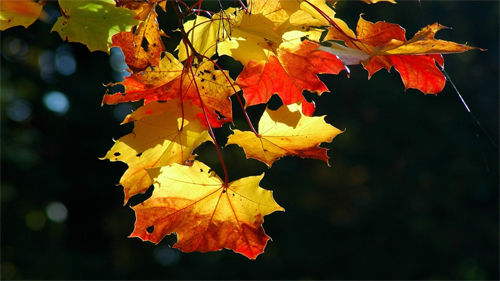 Autumn Leaves Wallpapers<br /> http://wallpaperstock.net/autumn-leaves-wallpapers_w25543.html