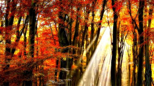 Autumn<br /> http://nature.desktopnexus.com/wallpaper/809754/