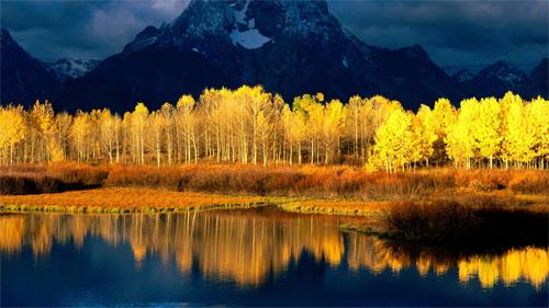 Autumn Forest in Sunshine<br /> http://www.wallpaperhere.com/Autumn_Forest_in_Sunshine_33248