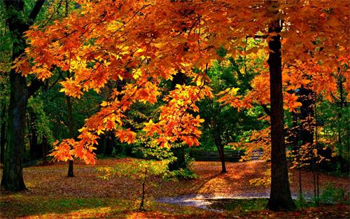 Autumn Colours<br /> http://www.wallpaperhere.com/Autumn_Colours_27909