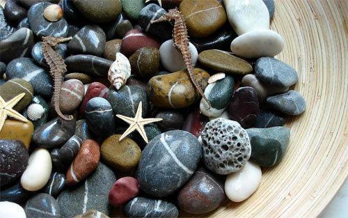 水产石<br /> 原始分辨率:1920×1200像素。<br /> http://nature.desktopnexus.com/wallpaper/1198302/