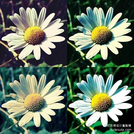 Photoshop菊花动作<br /> http://www.flickr.com/photos/eddiemalone/2625688335/