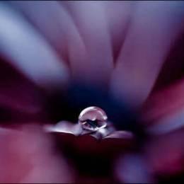 你的爱,有多晶莹 – Natalia Campbell的摄影作品