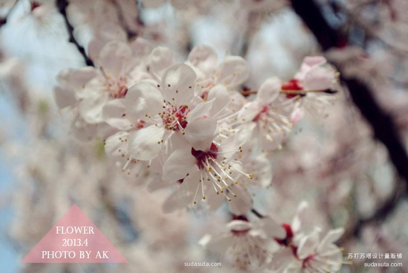 春花烂漫时