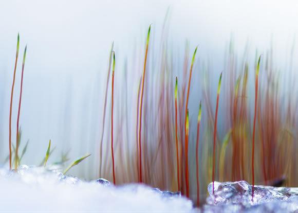 Joni Niemelä<br /> http://1x.com/photo/51552/category/macro/latest-additions/spring