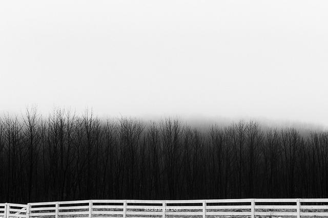 Deirdre Malfatto 摄影作品欣赏