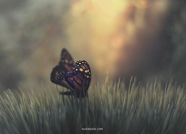 Creative photography by Rachel Bellinsky
