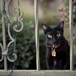 Rachel Bellinsky 街角的黑猫
