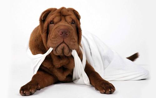 Cute Dog Wallpaper<br /> http://www.wallpaperhere.com/Animal/Dogs/cute_dog_102311