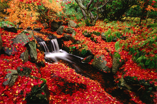 Red Leaves Wallpapers<br /> http://wallpaperstock.net/red-leaves-wallpapers_w8912.html