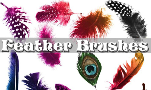 Feather Brushes<br /> http://www.brusheezy.com/brushes/35714-feather-brushes
