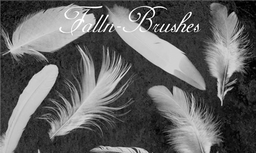Feathers Brushes Set 1<br /> http://falln-stock.deviantart.com/art/Feathers-Brushes-Set-1-92728583