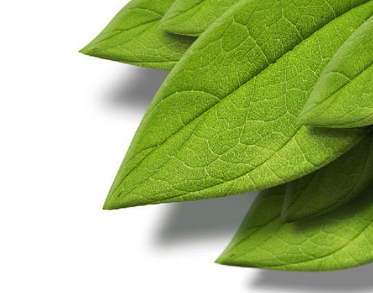 绘制一个带有纹理的立体树叶<br /> http://psd.tutsplus.com/tutorials/photo-effects-tutorials/how-to-create-a-3d-leaf-from-a-texture-photograph/