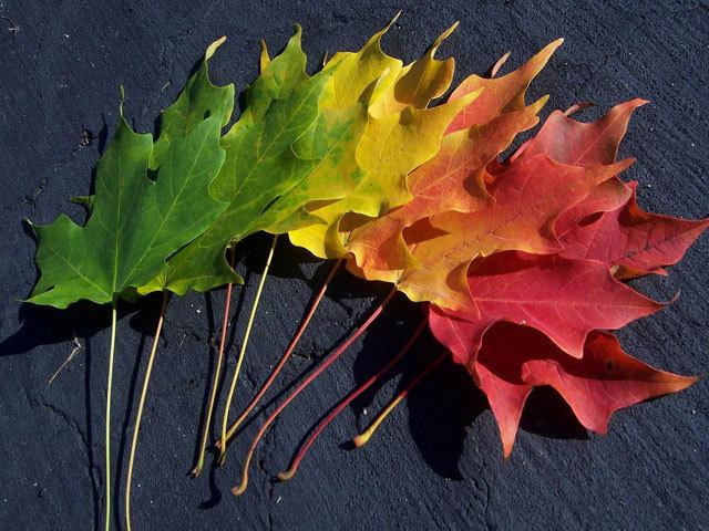 Spectrum of Autumn<br /> http://thetangyzip.deviantart.com/art/Spectrumn-of-Autumn-Wallpaper-25896734