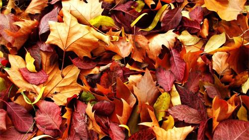 Autumn-Carpet<br /> http://nature.desktopnexus.com/wallpaper/813727/