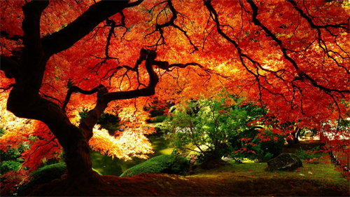 Maple in Autumn Wallpapers<br /> http://wallpaperstock.net/maple-in-autumn-wallpapers_w25571.html