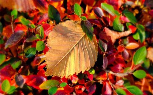 Autumn Leaf<br /> http://www.wallpaperhere.com/autumn_leaf_17548