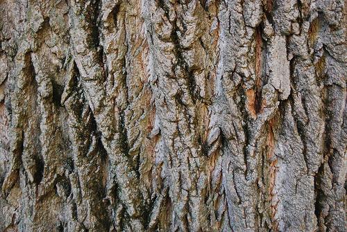 10个高品质的免费树皮纹理