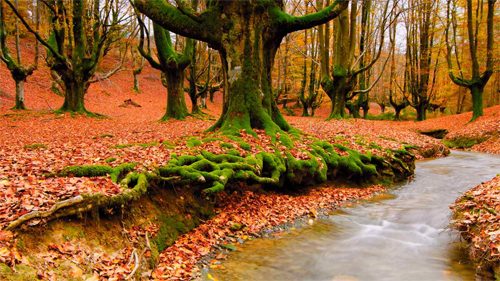 Beautiful Autumn<br /> http://nature.desktopnexus.com/wallpaper/821216/