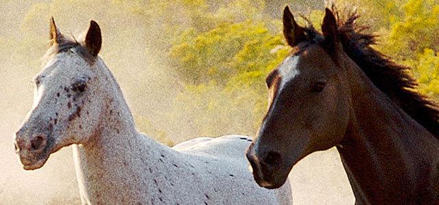 在Photoshop中的图像模拟胶片颗粒 http://www.photoshopessentials.com/photo-effects/film-grain/