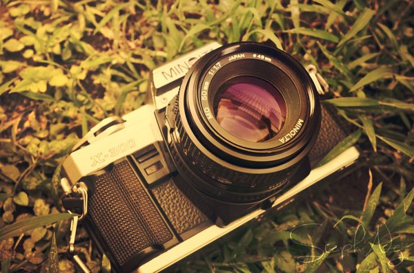 A camera lying in the grass on the first day of summer.