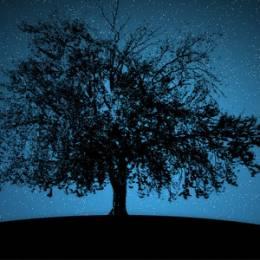 带有大树的自然壁纸下载
