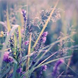 安静的花儿 22p