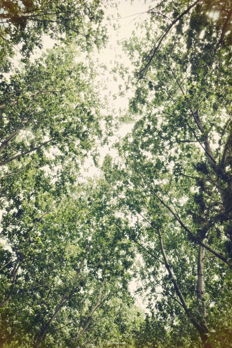 Tmachr 树木荫荫