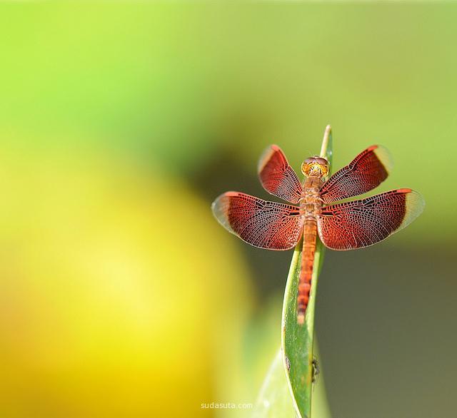 Anna Kwa 花朵之爱