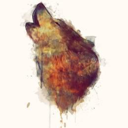 Amy Hamilton 动物主题水彩插画欣赏