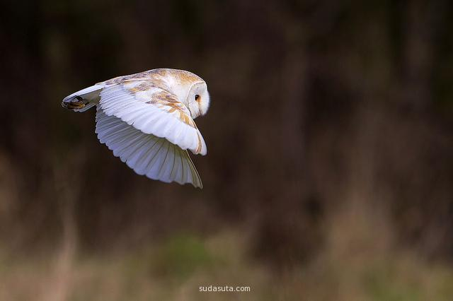 Steven Ward 美丽的自然与鸟类