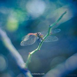 来自flickr的摄影作品欣赏