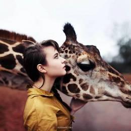 主题摄影 温馨长颈鹿