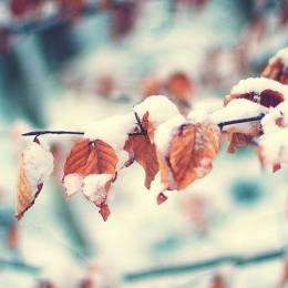 Sarah Lewis 秋冬自然印象