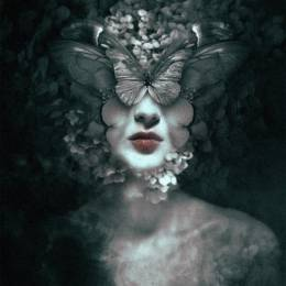 Federico Bebber 蝴蝶与美人