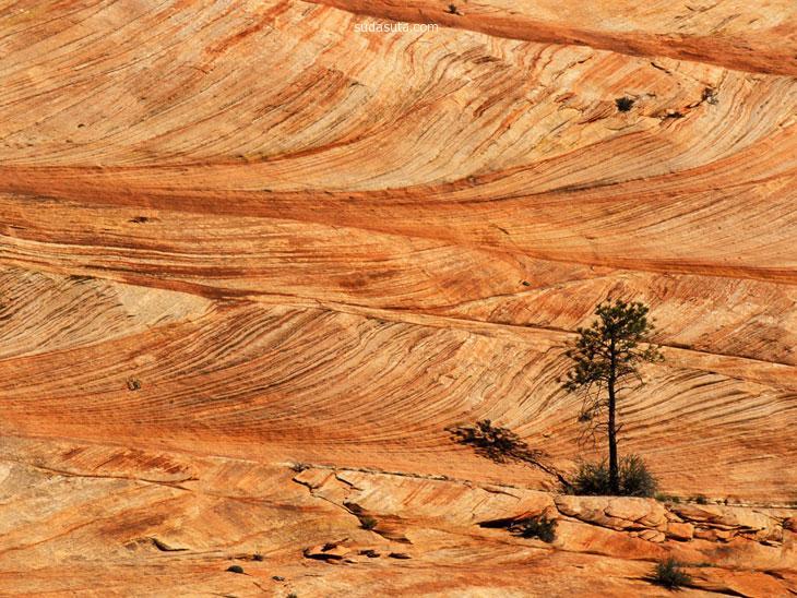 主题摄影 锡安国家公园