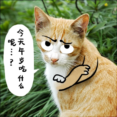 郑插插 手绘Q图 可怜的猫咪们